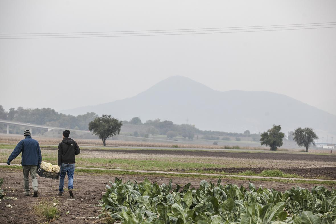 Paběrkování na českých polích zachraňuje tuny nezávadných potravin