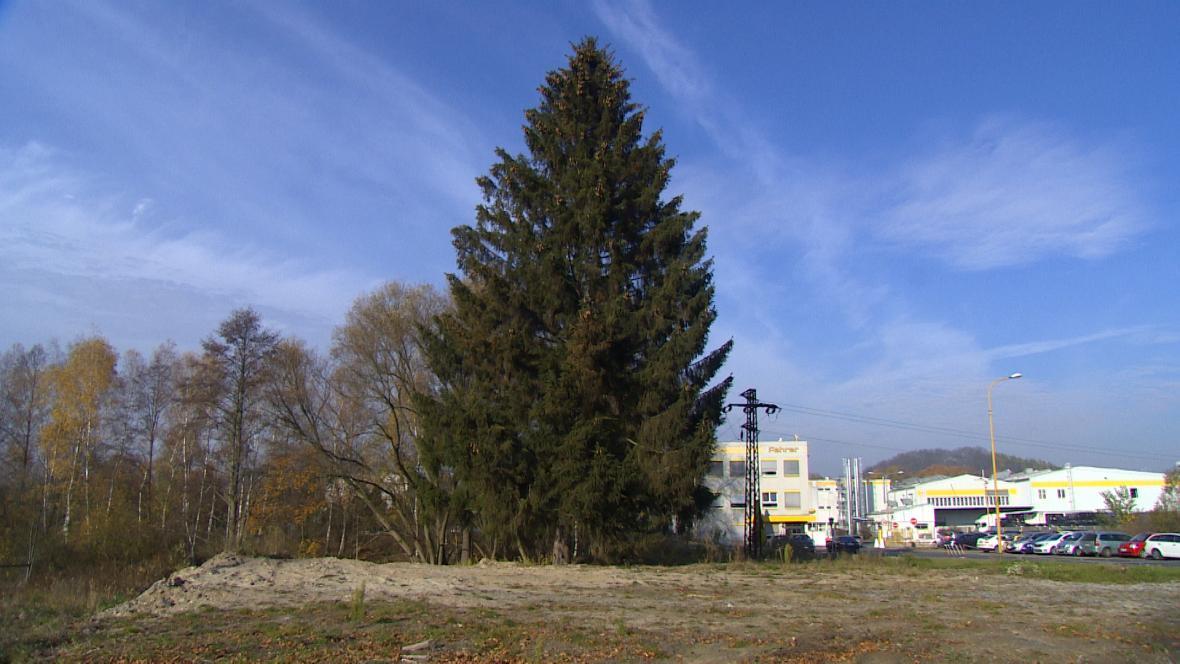 Vánoční strom pro Prahu je letos z České Lípy