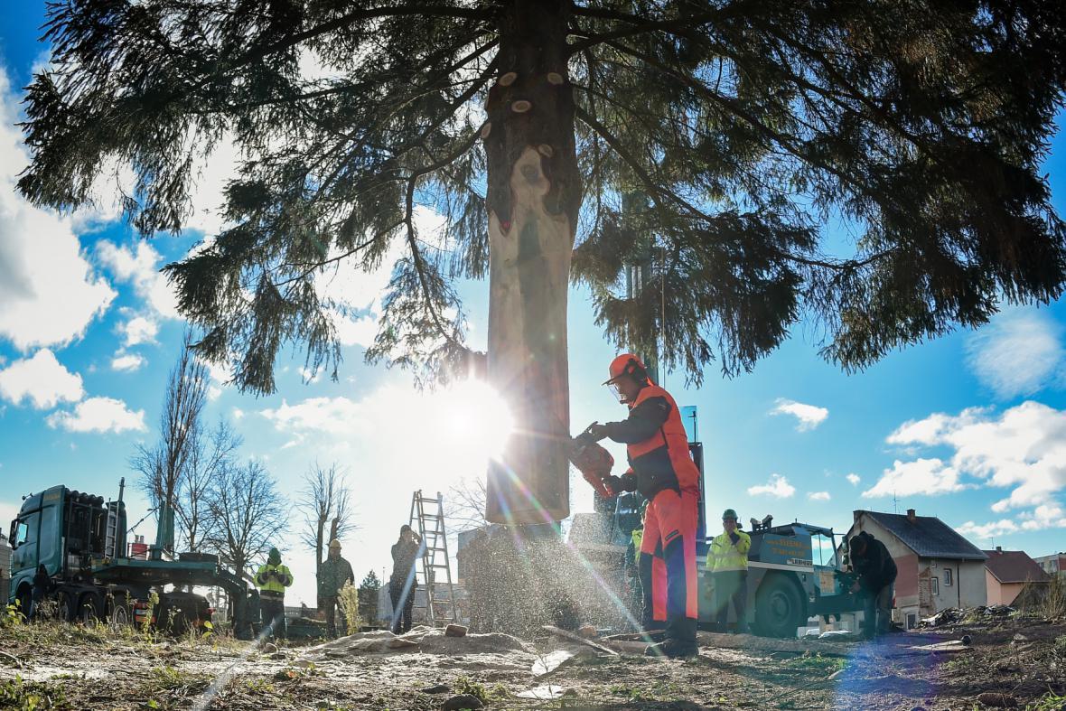 Kácení vánočního stromu pro Staroměstské náměstí v Praze