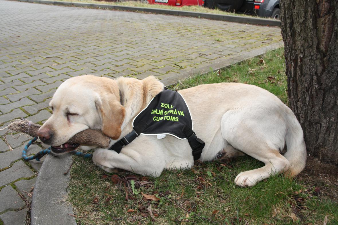 Max - legendární pes celní správy