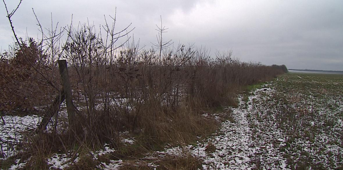 Větrolamy jsou potřeba, chrání půdu před erozí