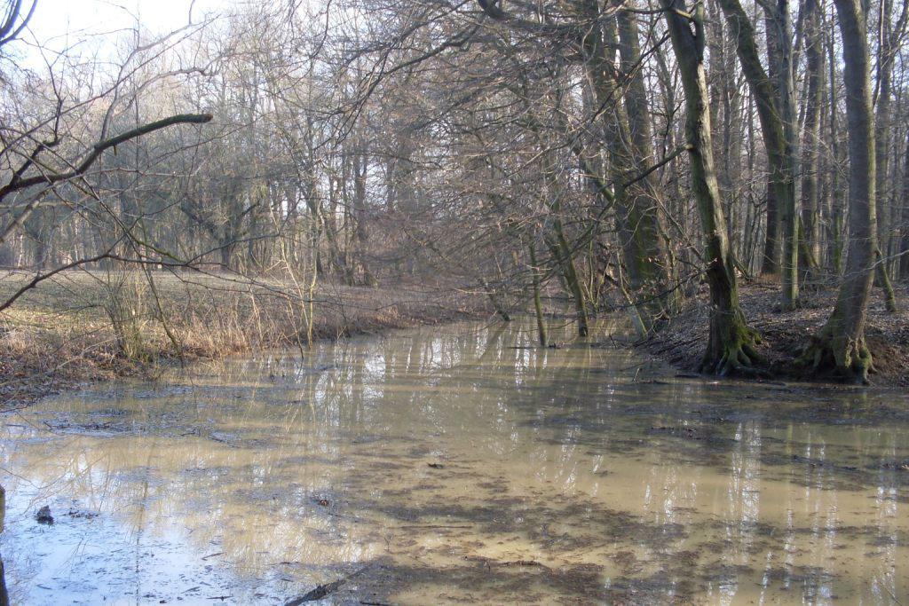 Zavodňování Kněžpolského lesa