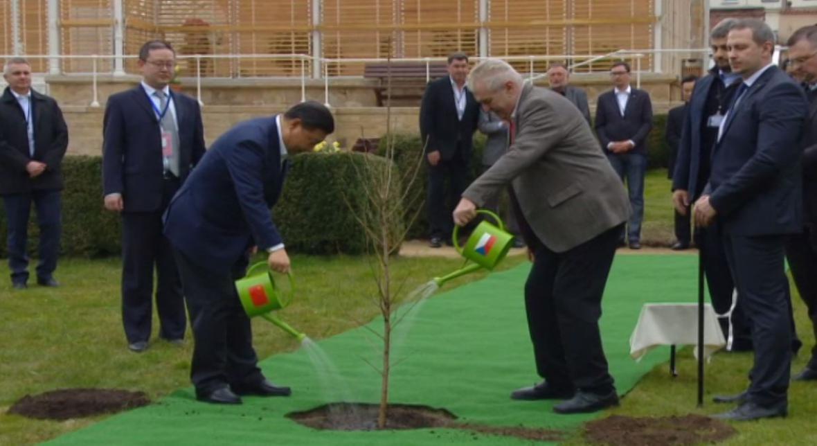 Miloš Zeman a Si Ťin-pching zasadili strom