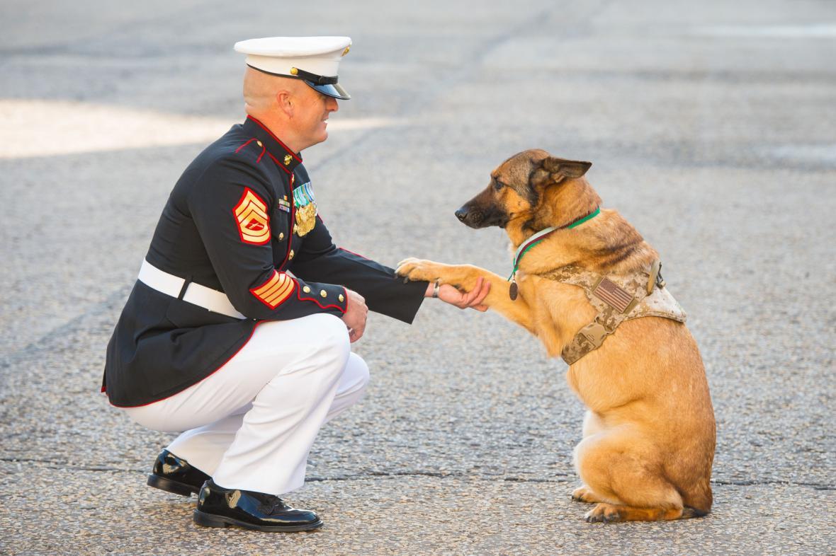 psí hrdinka oceněna za nasazení v misích