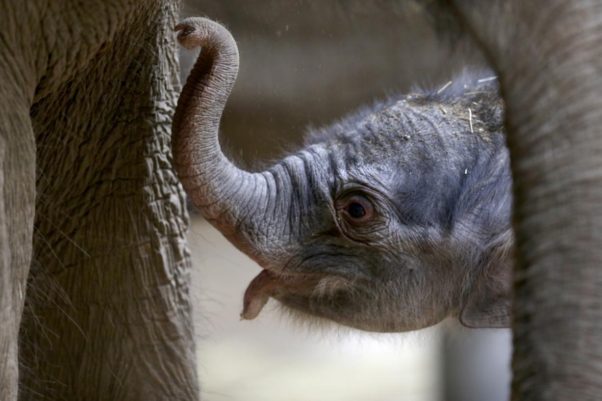 Den staré mládě v pražské zoo