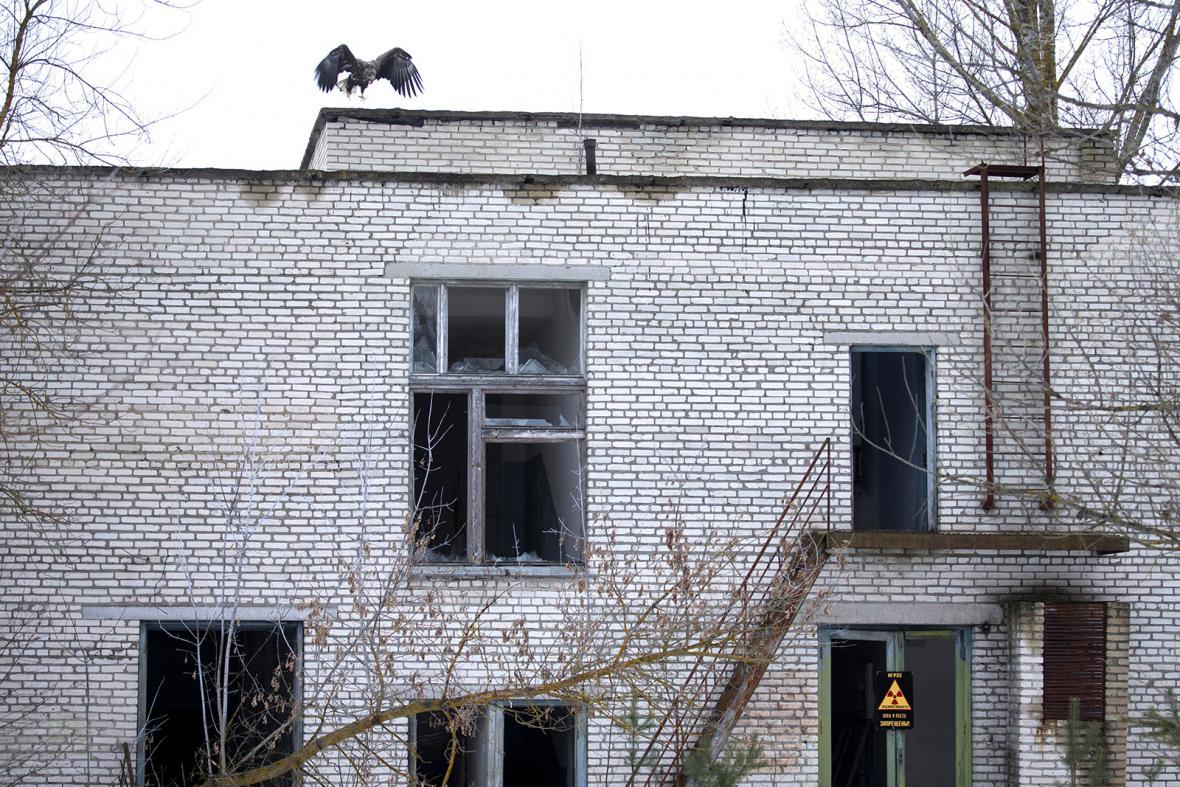 Divočina v černobylské Zóně
