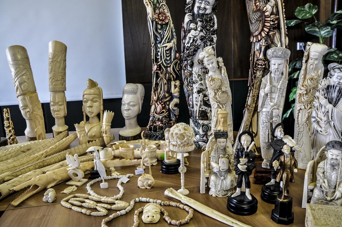 Celní správa ČR a Česká inspekce životního prostředí představila v rámci operací Tygří oko, Kostka a Ebur výsledky dosud největšího zásahu proti ilegálnímu obchodu se slonovinou a produkty z chráněných živočichů na území ČR