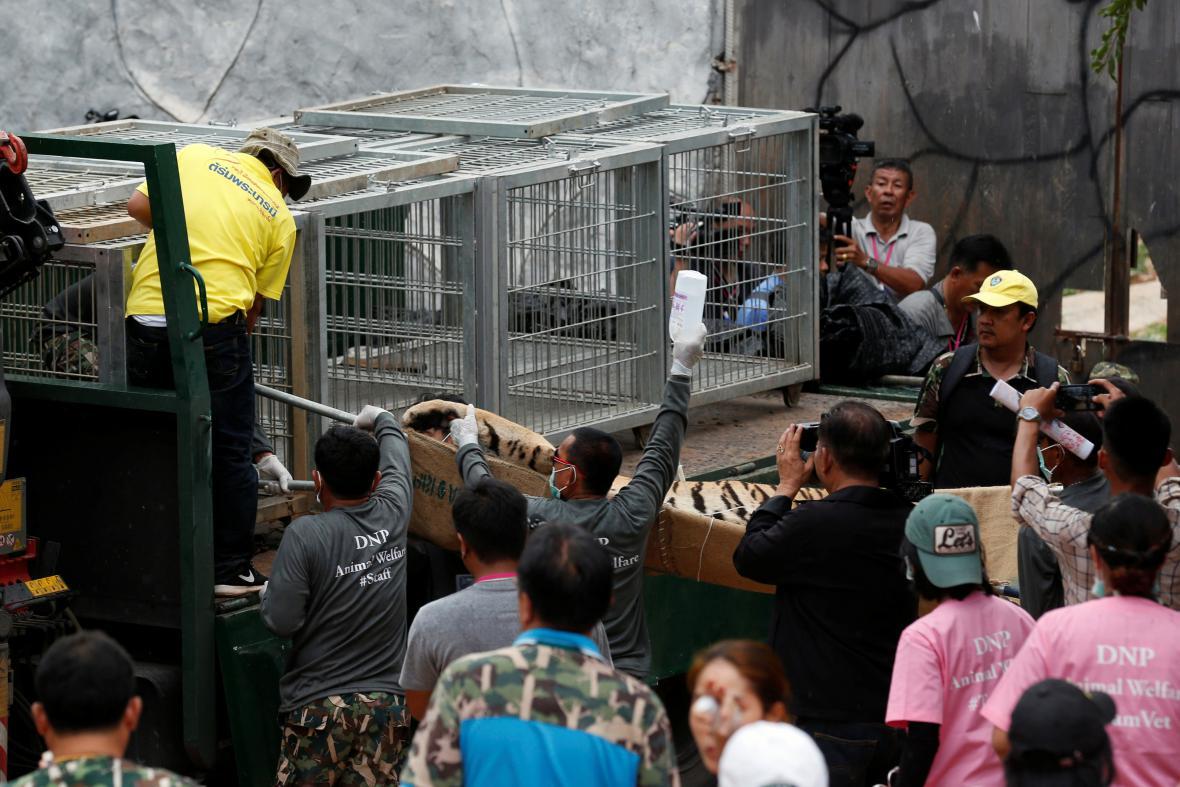 Přesun tygrů z kontroverzního thajského chrámu