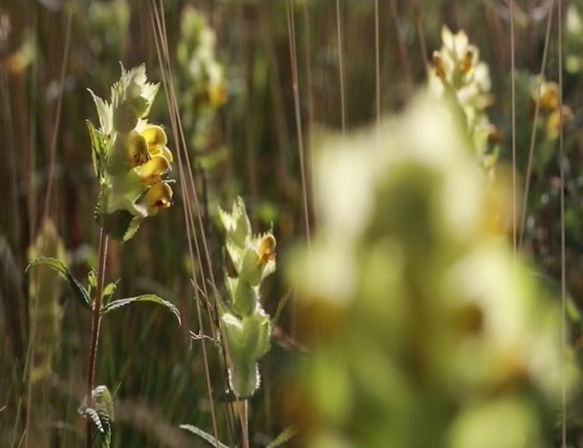 Kokrhel zvyšuje biodoverzitu v okolí dálnic