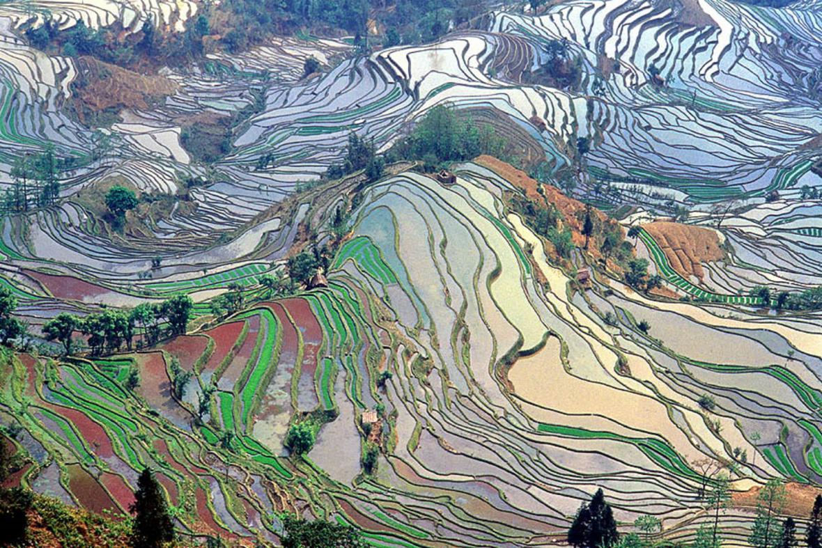 Terasovitá rýžová pole v Jün-nanu