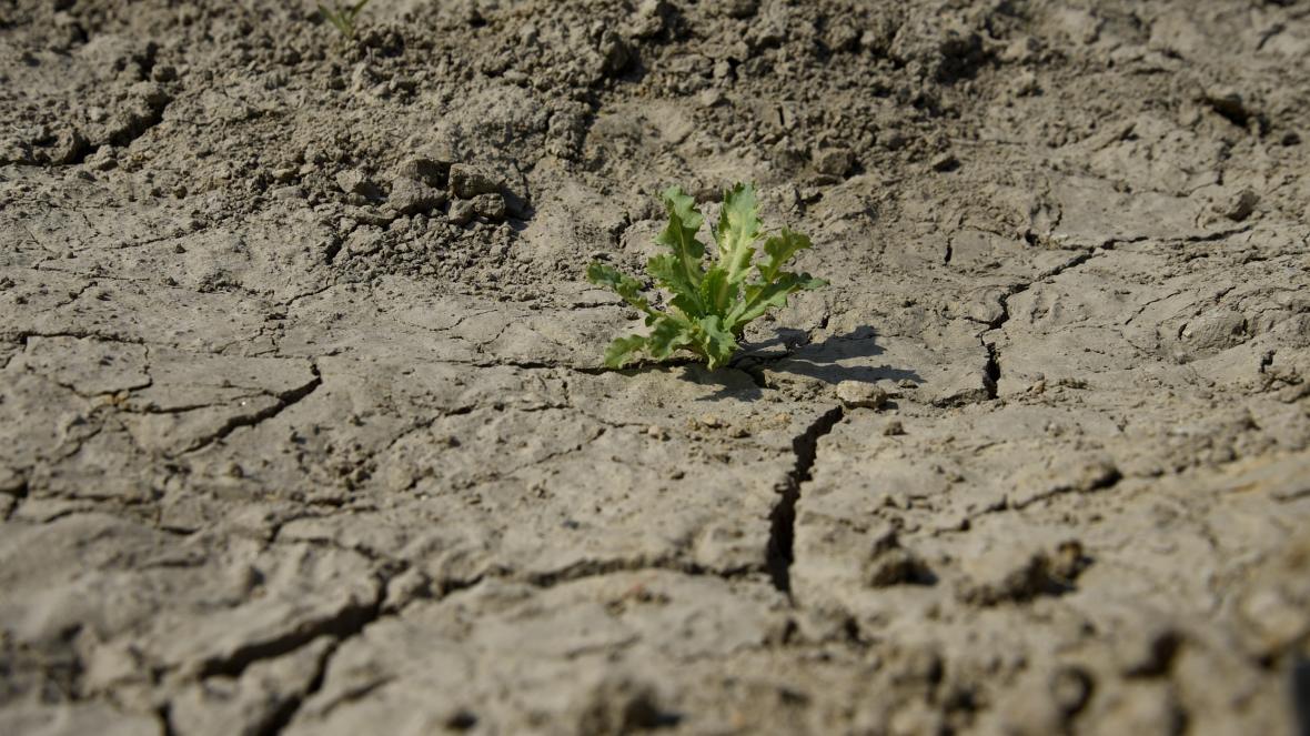 Sucho v Dětmarovicích