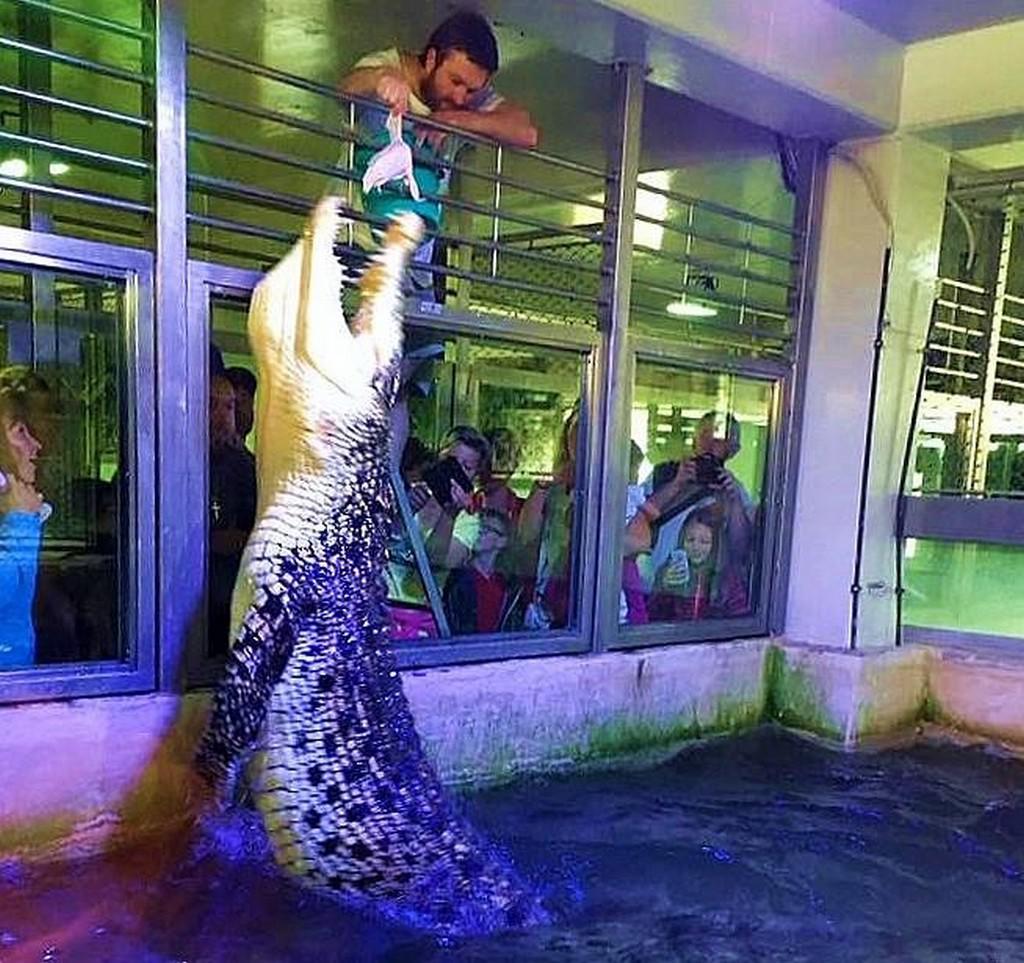 Krokodýl mořský v Protivíně nakladl vejce