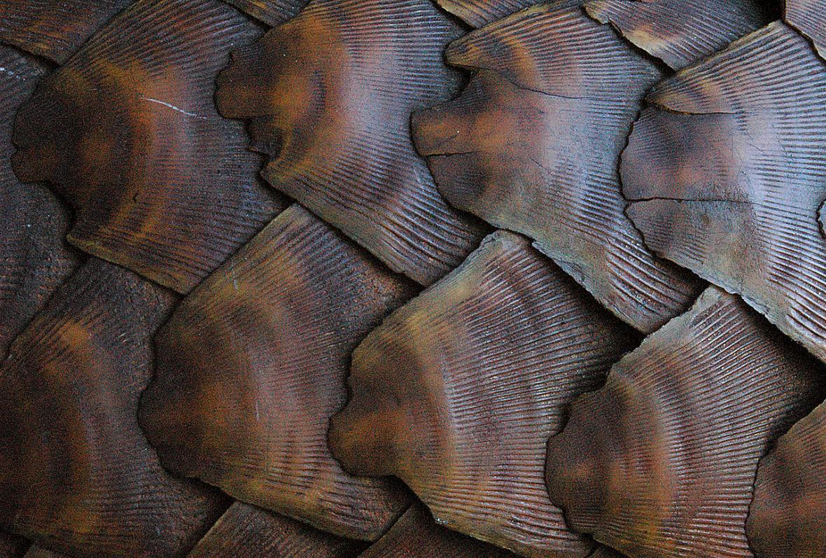 Luskouni - oživlé šišky