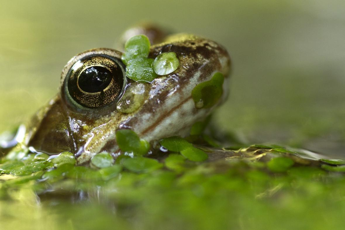 Nejlepší snímky fotografické soutěže ZSL Animal Photography Prize
