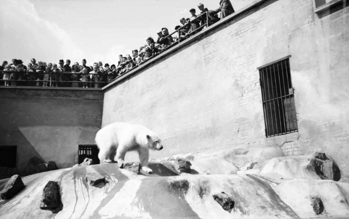 Zoo Praha na historických snímcích - výběh ledních medvědů