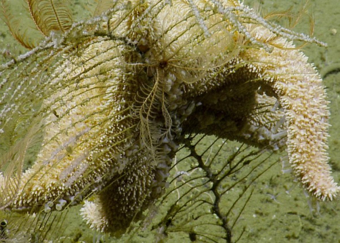 Snímky mořského dna z mise EV Nautilus
