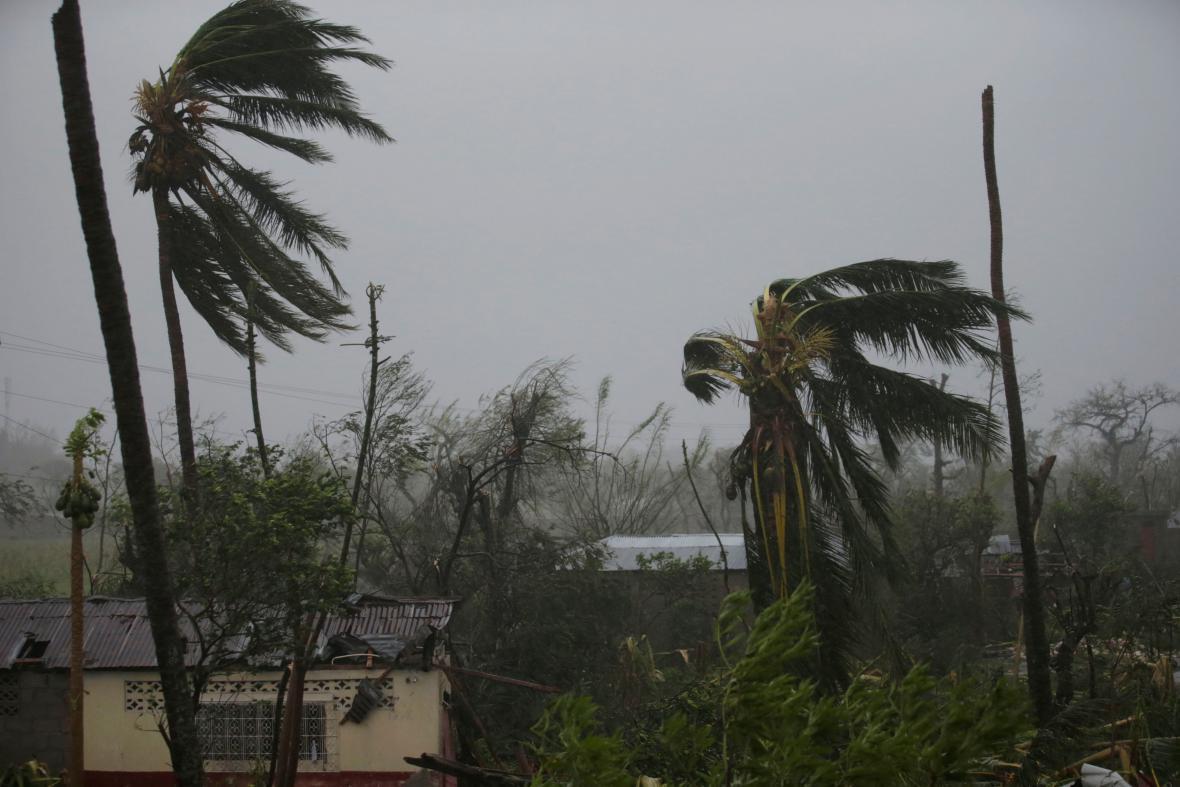 Zničené stromy v haitském přístavu Les Cayes, kterým se prohnal hurikán Matthew