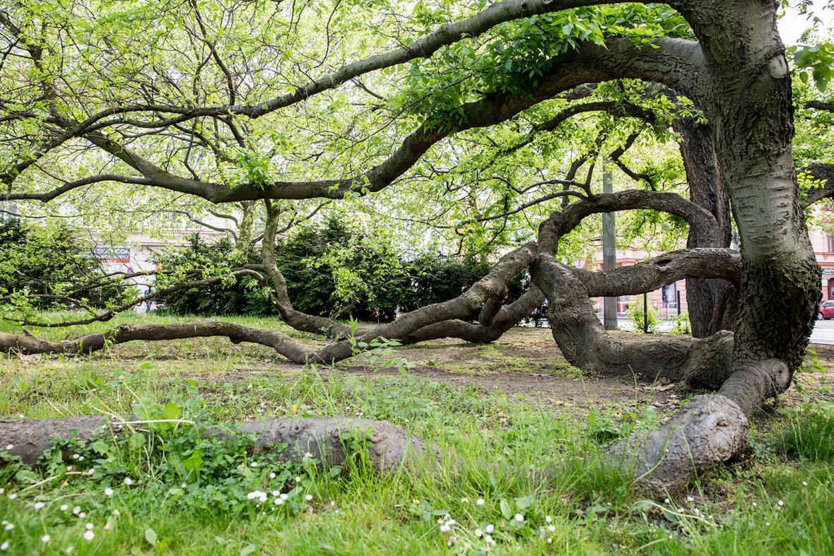 Strom roku 2016