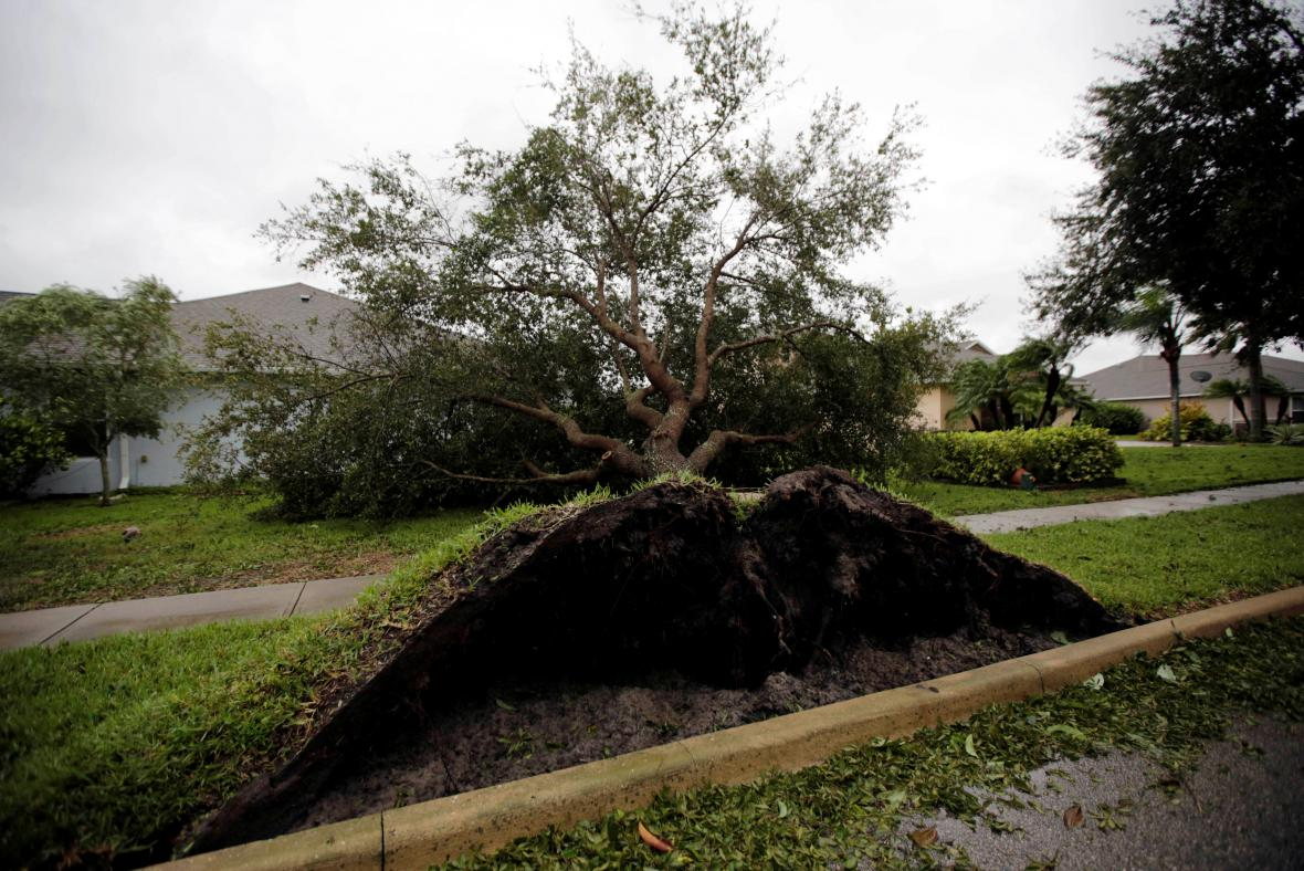Vyvrácený strom ve městě Daytona Beach na Floridě