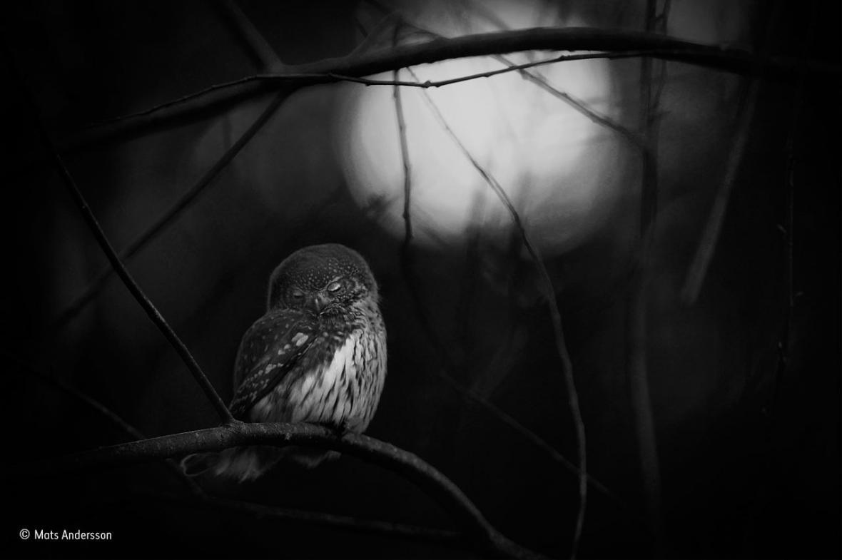 Wildlife Photographer of the Year - nejlepší fotografie divoké přírody za rok 2016