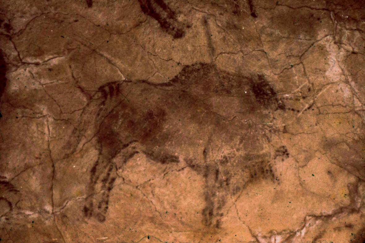 Bizoni z Altamiry