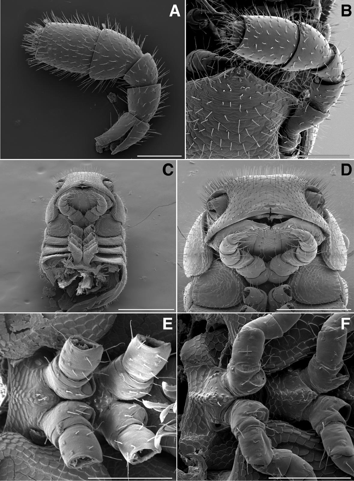 Detaily těla nově objevené mnohonožky