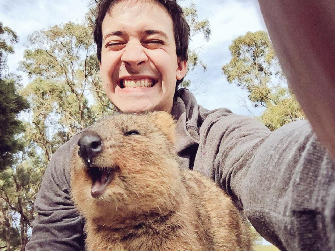 Móda selfie klokanům quokka uškodila