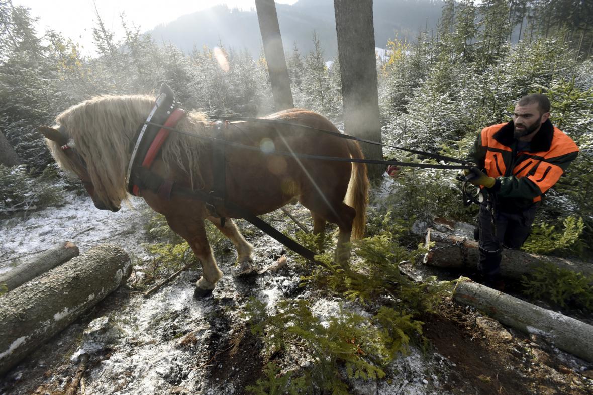 Stromy z lesů pomáhají stahovat koně