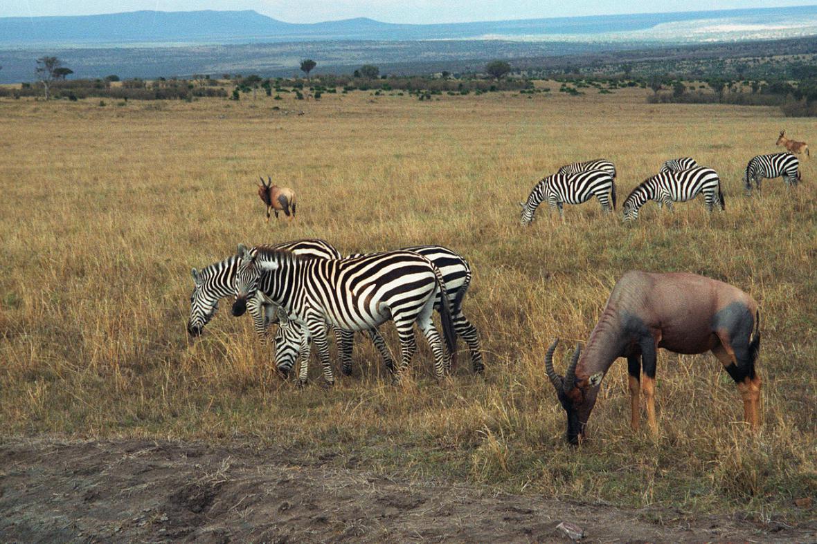 Zvířata v Masai Mara