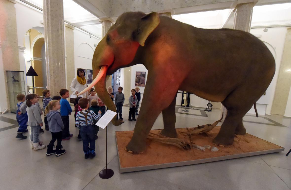Preparát slona indického