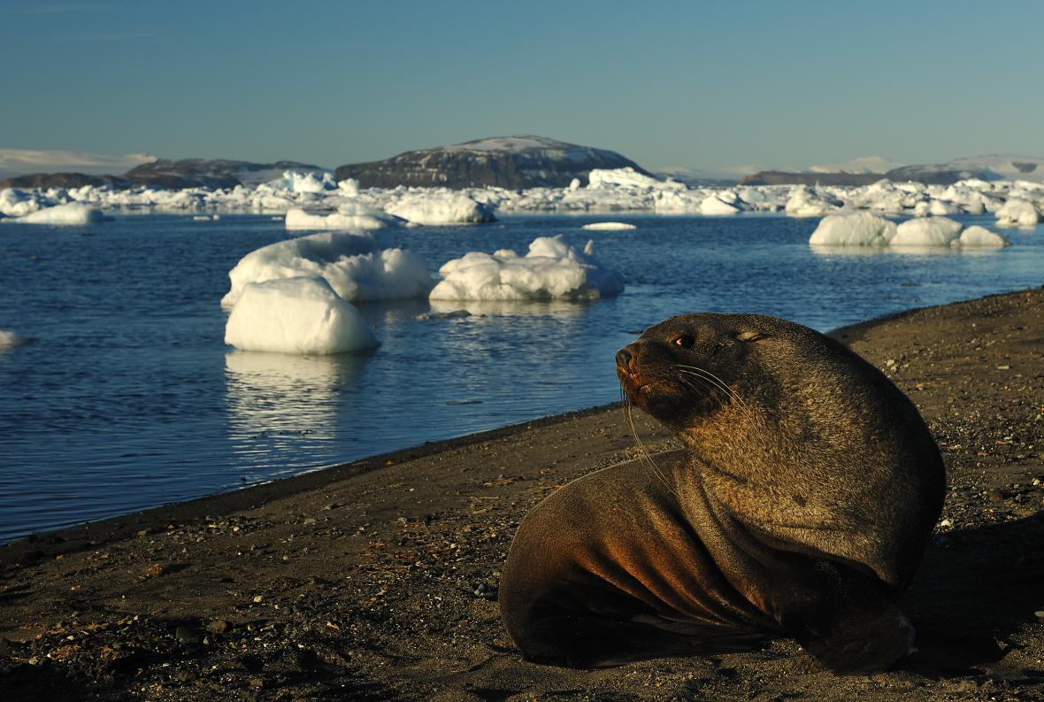 Antarktida není mrtvý kontinent