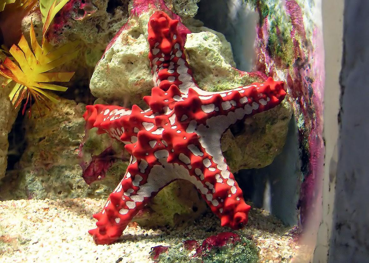 Podivná krása mořských hvězdic