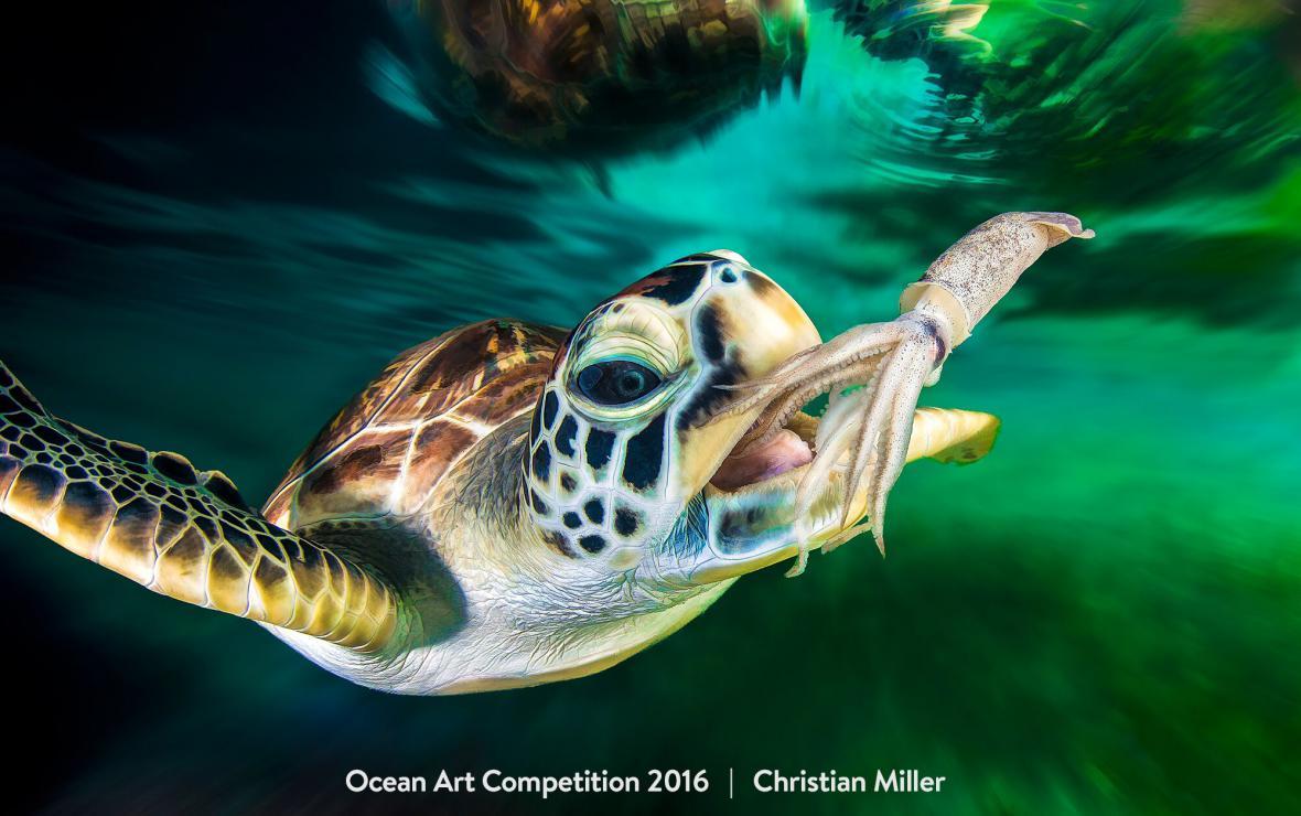 Vítězné snímky soutěže Ocean Art Underwater Photo Competition