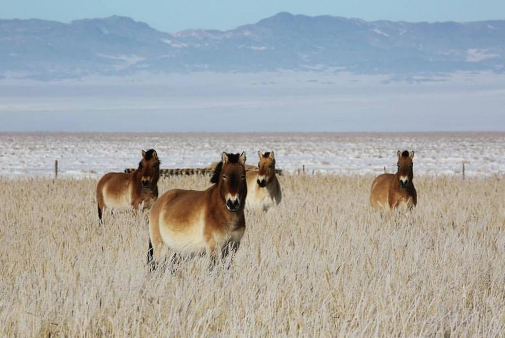 Převaláci v zimní Gobi