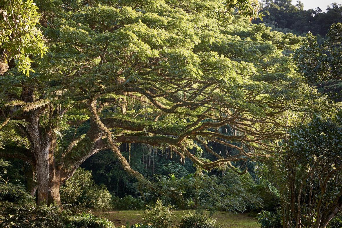 Evropský strom roku
