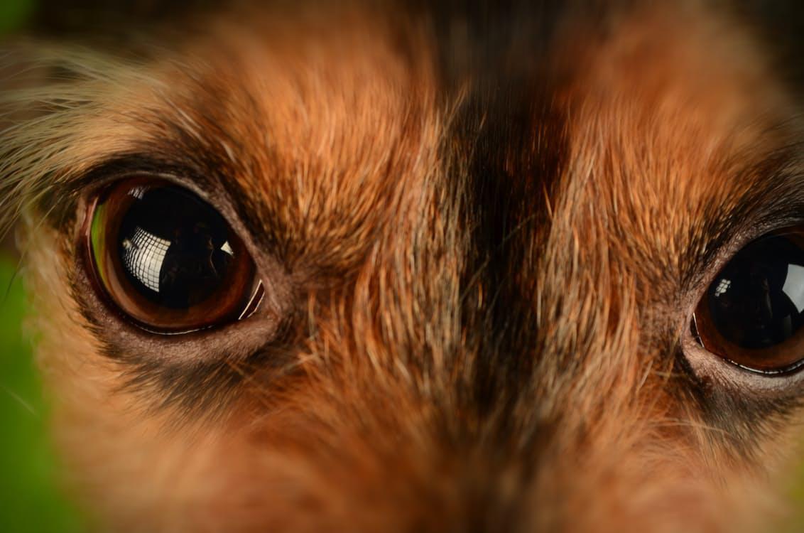 Fenomén zvaný psí oči
