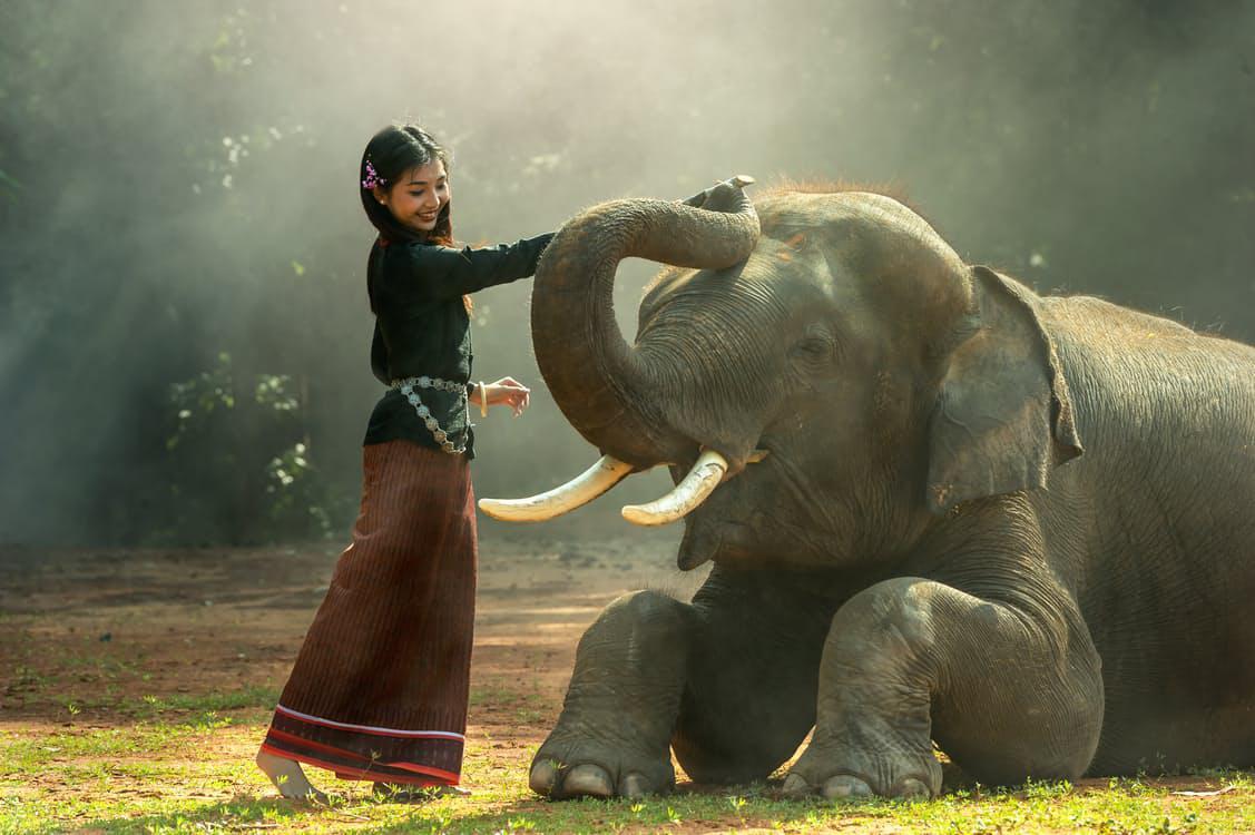Přílišná blízkost lidí může zvířatům škodit