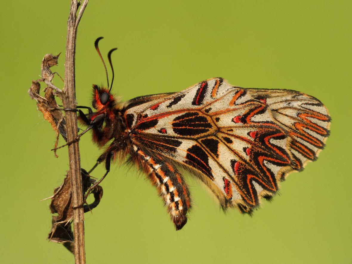 Vzácné druhy fauny a flóry Načeratického kopce