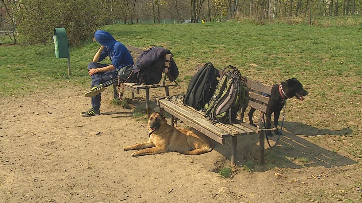 Psí bezdomovci by mohli mít v Brně své útočiště