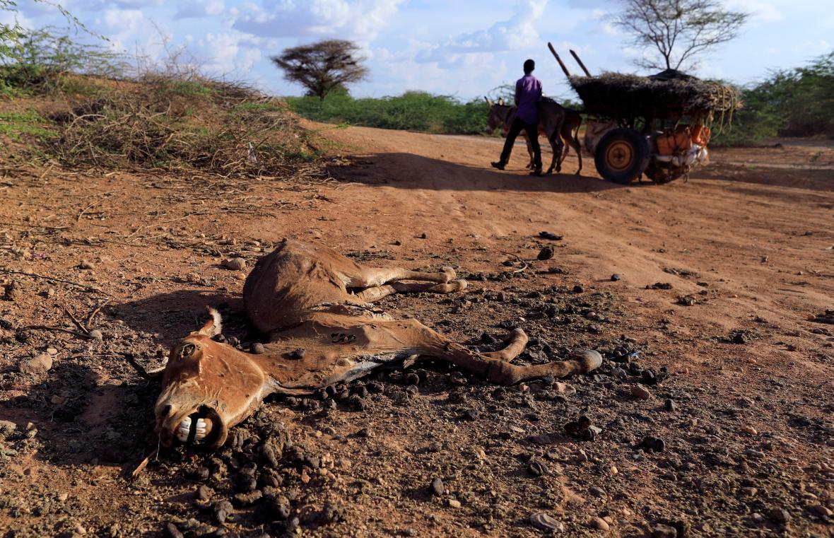 Somálsko sužuje nebývalé sucho
