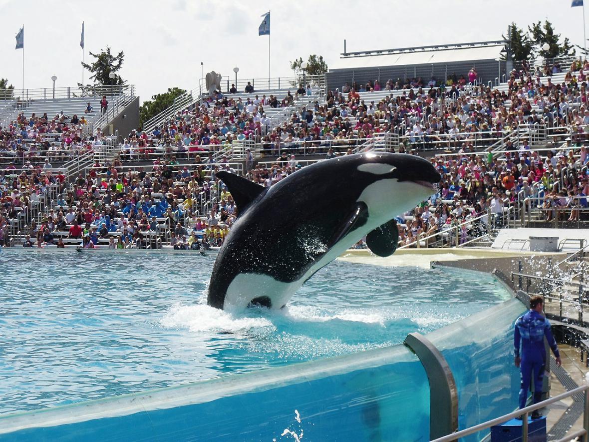 Kosatka v delfináriu