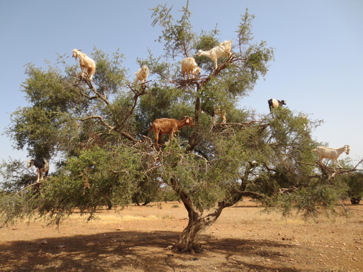 strikani na kozy public agent