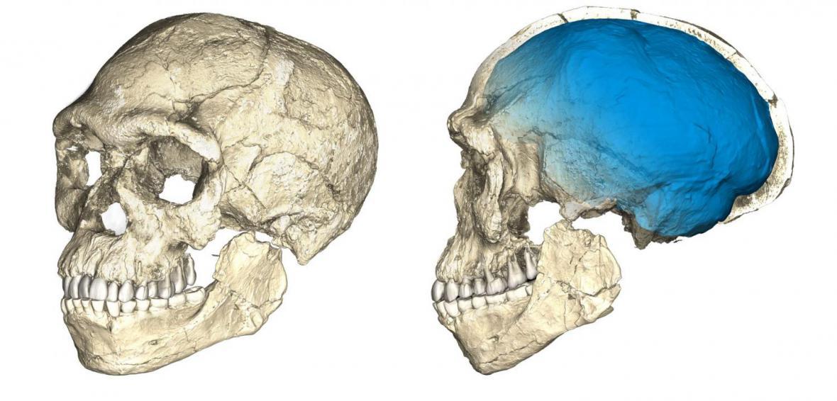 Lebka prvního člověka