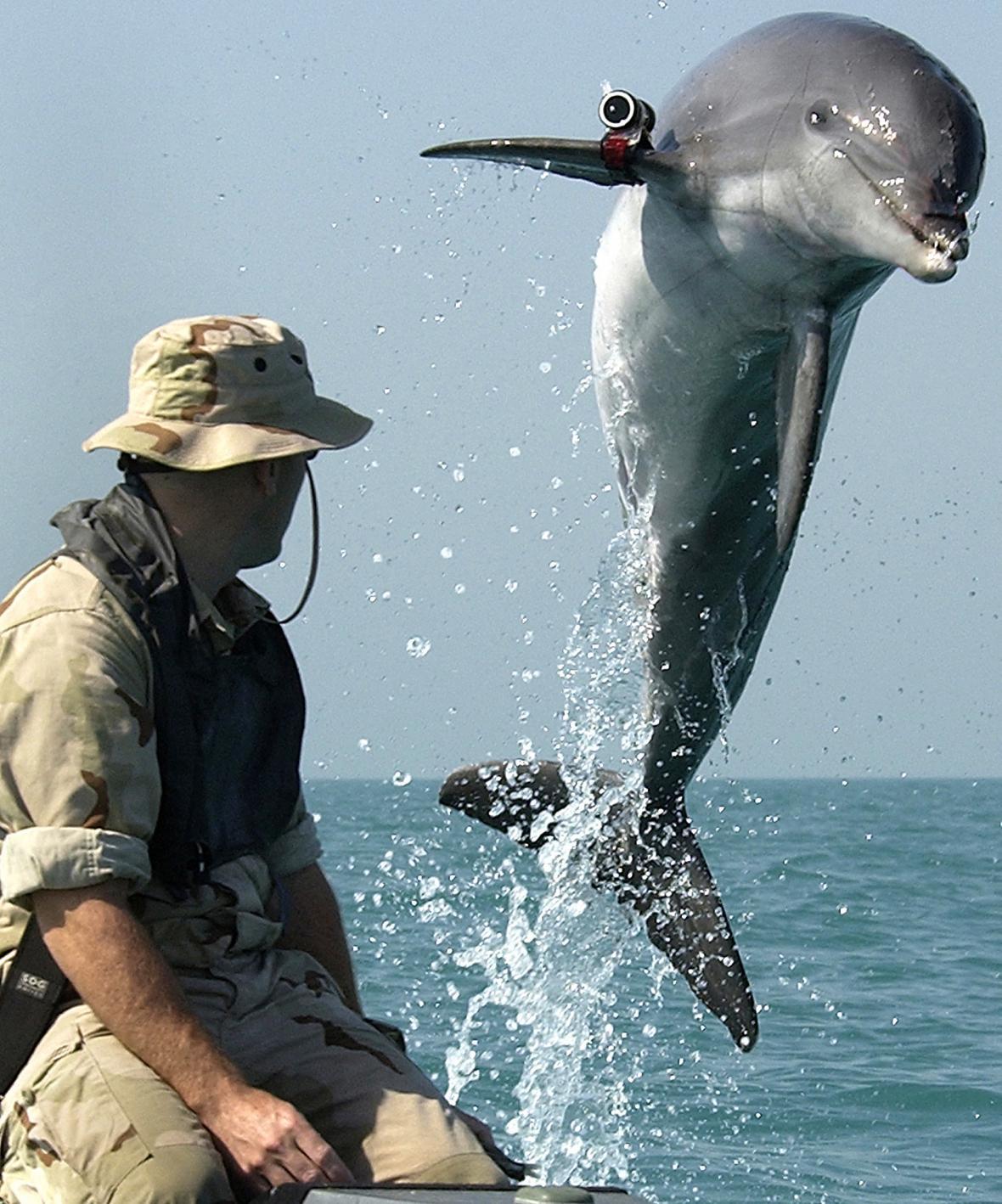 Armádní delfín