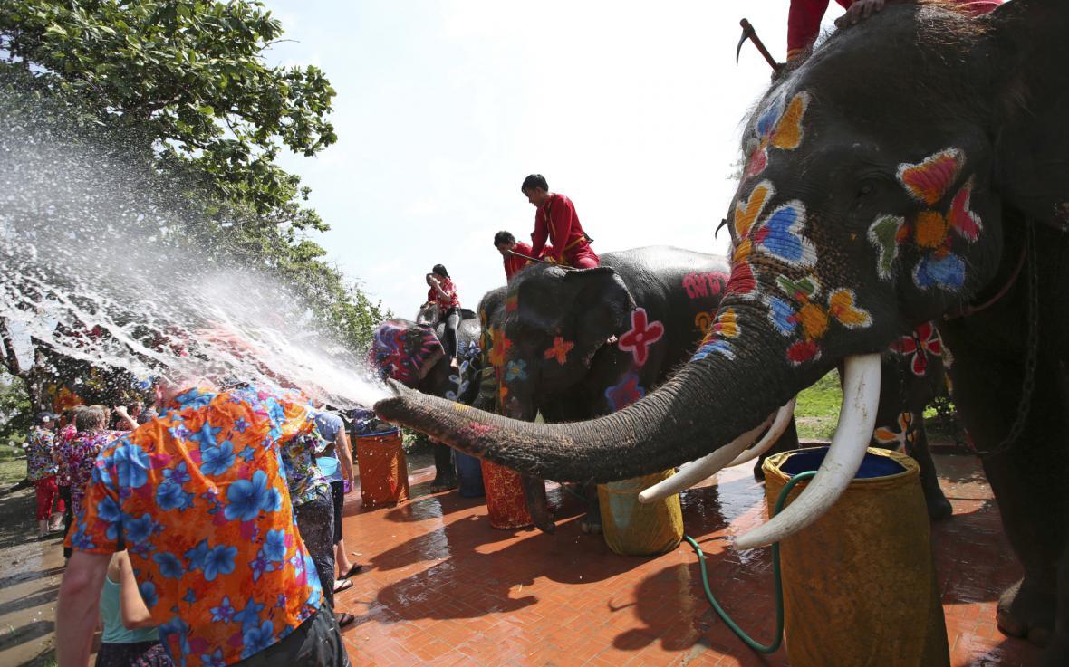 Sloní turistika v Thajsku