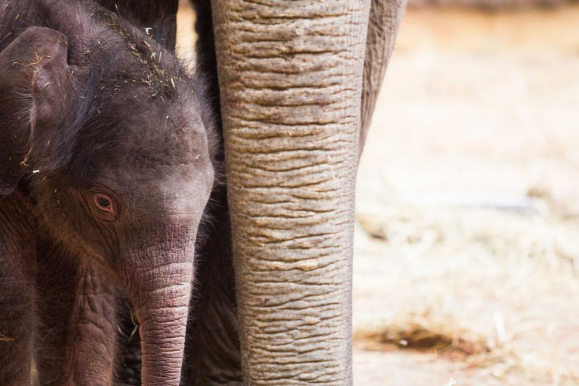 Nový přírůstek v ostravské zoo