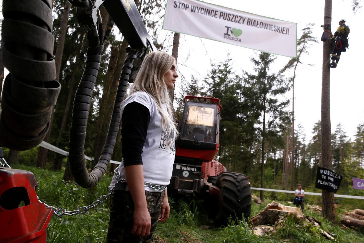Bělověžský prales