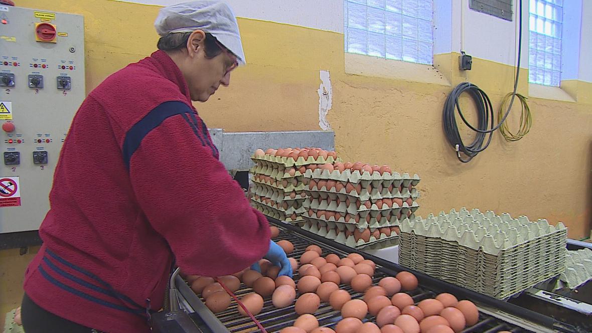 V Pohořelicích už salmonela nehrozí