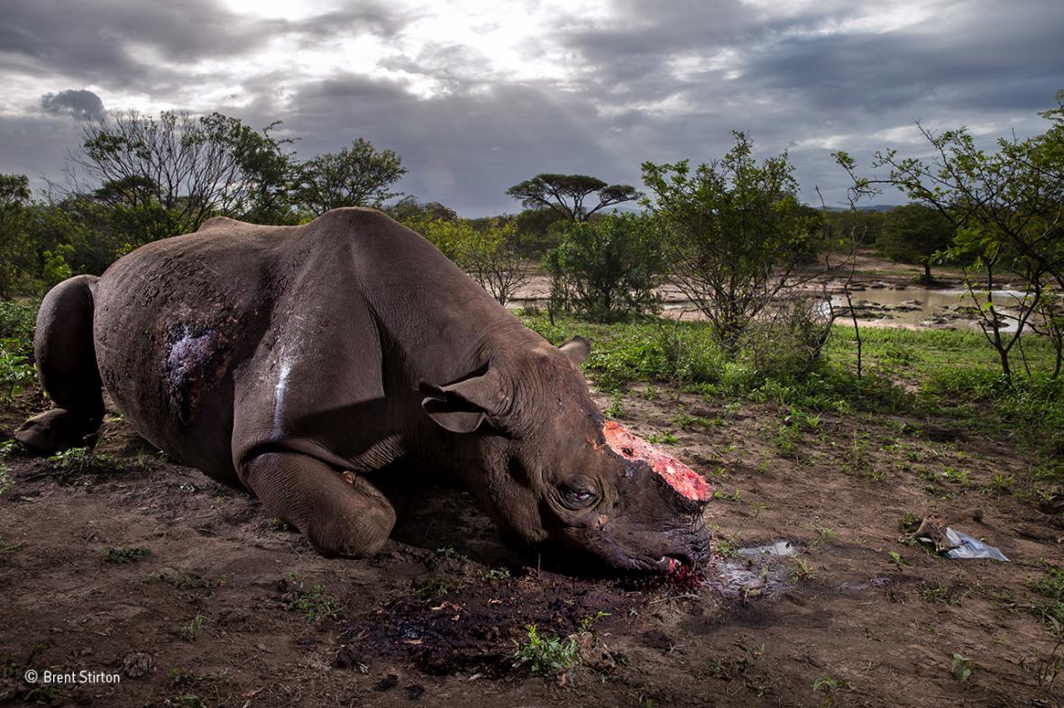 Vítězné snímky soutěže Wildlife Photographer of the Year 2017