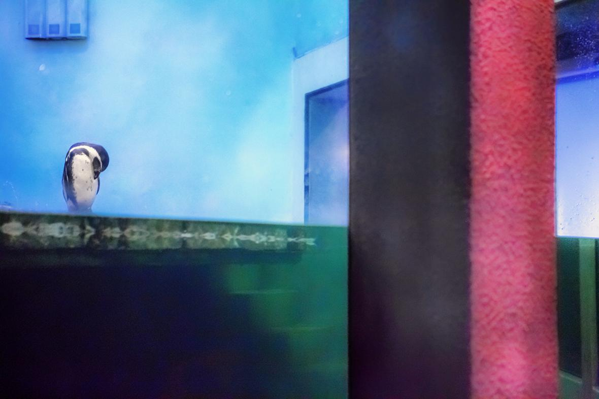 Z výstavy Radka kalhouse: Divočina